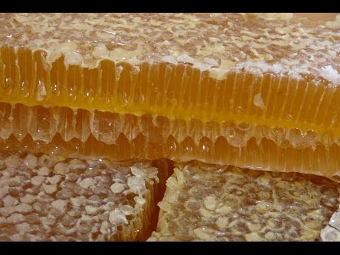 Содержание пчел на чердаке частного дома