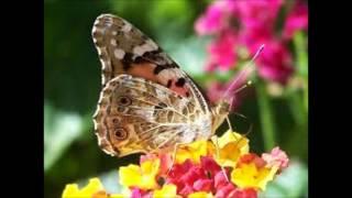 Primavera: allegro-Antonio Vivaldi base per flauto