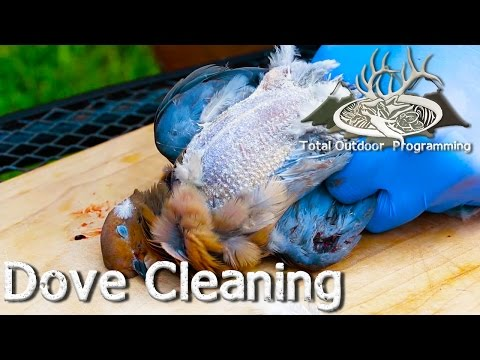 How to Clean and Field Dress a Dove - TOP How to video series