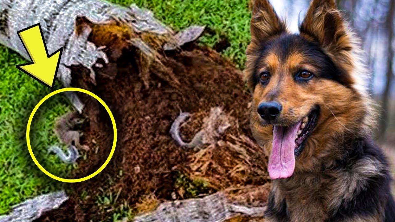كلب بوليسي ظل ينبح على احد الاشجار وقد عثر الرجل بداخلها على اكثر بكثير من مجرد خشب