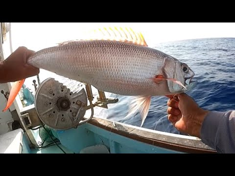 Impact Of The Evolution Of Electric Reels On Deep Sea Fishing