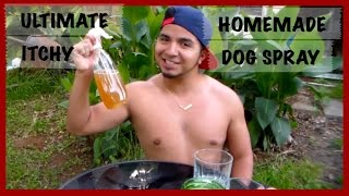 THE ULTIMATE HOMEMADE ITCHY DOG SPRAY