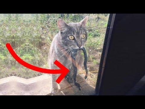 Коты достойные оскара смешные за 2 января