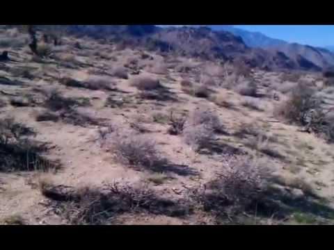Digging up Veromessor pergandei queens - Palm Desert, California 2-8-2015