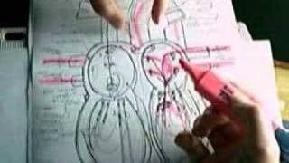 TCE MED 2013 Basic Gross anatomy  of the  human heart