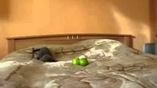 Фильм ужасов про кошек 1