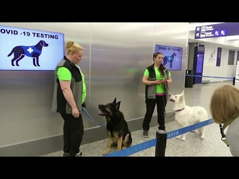 COVID-sniffing dogs used at Helsinki airport