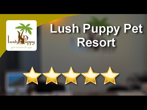Lush Puppy Pet Resort Jupiter          Exceptional           Five Star Review by Danielle G.