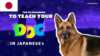 Teach Your Dog Commands In Japanese (20 Common Words)