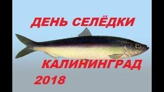 День селёдки, Калининград 2018