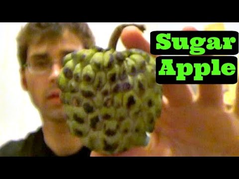 Sugar Apple Review - Weird Fruit Explorer - Ep. 68