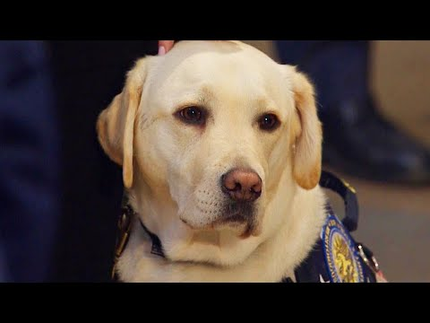 Shelley Wade - What's Next for Sully the Service Dog?