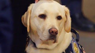 What's Next for Sully the Service Dog?