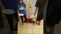 Izabella coulter 4th grade science experiment dog food taste test subject number 1