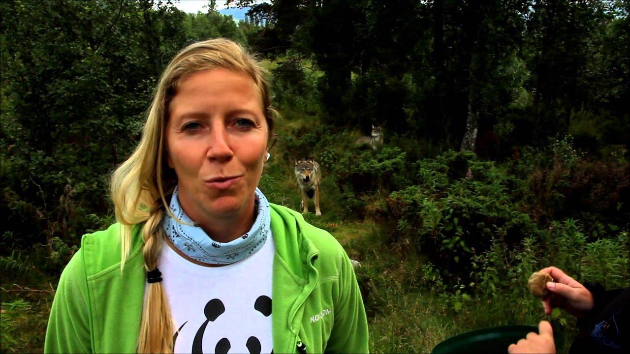 Nina Jensen om rovdyrpolitikk på Langedrag - YouTube