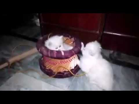 Beautiful cats playing