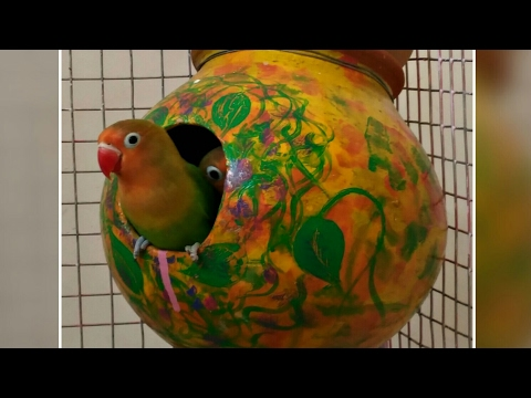 How To Make Hole(Surag) In Matka For Love Birds
