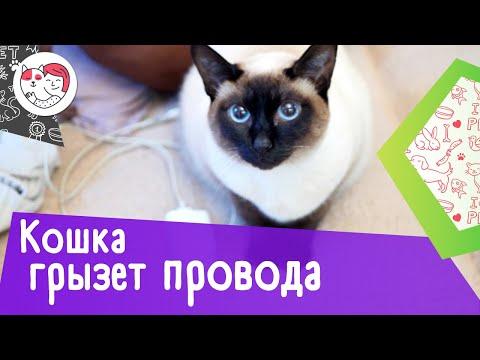 Вопрос: Как отучить кота грызть картонные коробки?