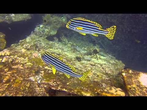 Diving Bali via Tokyo - FULL HD
