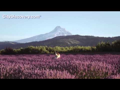 Mount Hood in Oregon - Visit with a Portland Day Trip