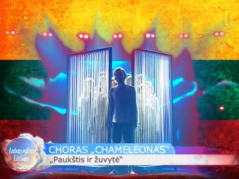 """Šiaulių choras """"Chameleonas"""" - """"Paukštis ir žuvytė"""" (Laura Remeikienė)"""