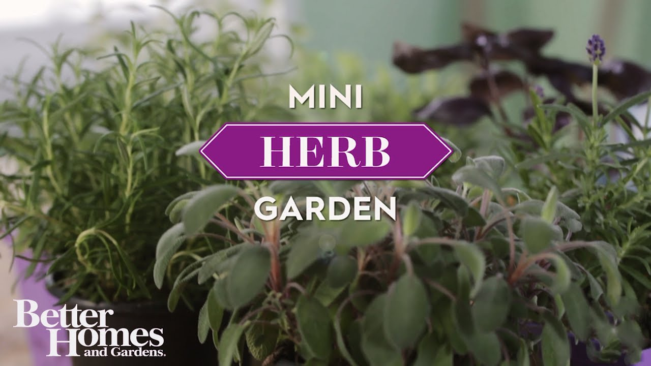 Diy One Hour Miniature Herb Garden