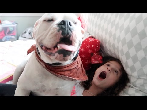 The Hundred Pound Dog (WK 309.2) | Bratayley