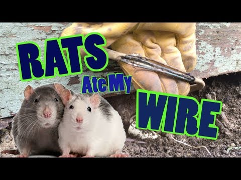 Rats Ate My Wiring Part 1
