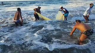 Pescaria de xaréu com rede de arrasto na Praia de  PLACAFORD - Salvador-Ba - BRASIL -  29.07.2018