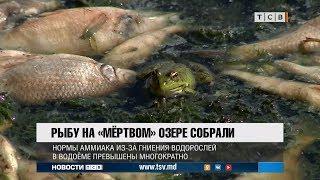 Рыбу на «мёртвом» озере собрали
