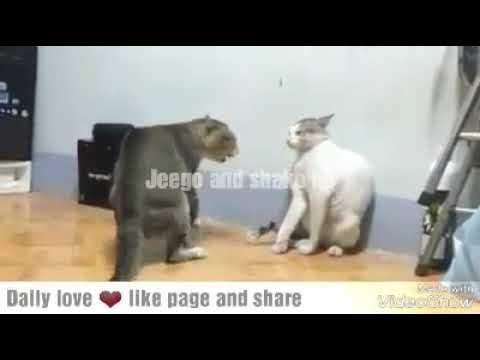 Two cats fighting over a president somali edition