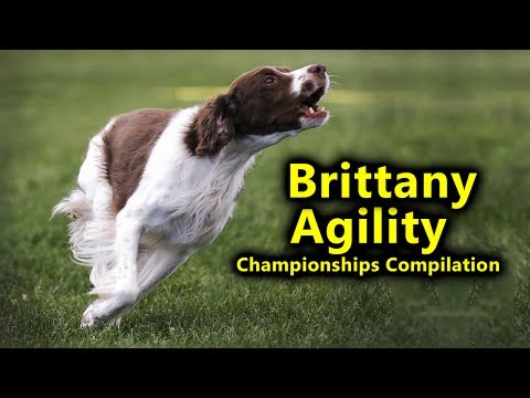 Brittany Agility at Championships 2017 AAC Alberta Regionals Compilation Hunter's Heart