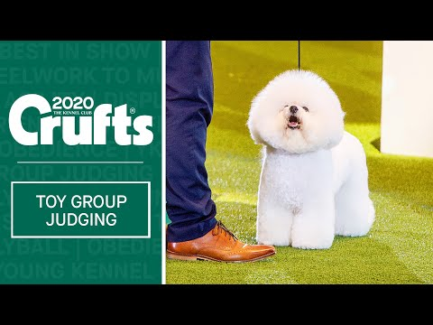 Toy Group Judging | Crufts 2020