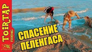 РЕДКИЕ КАДРЫ!!!  | Выход пеленгаса в море | Рыбалка на пеленгаса