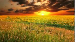 flowering sunflowers on a background sunset   1374700   Shutterstock Footage