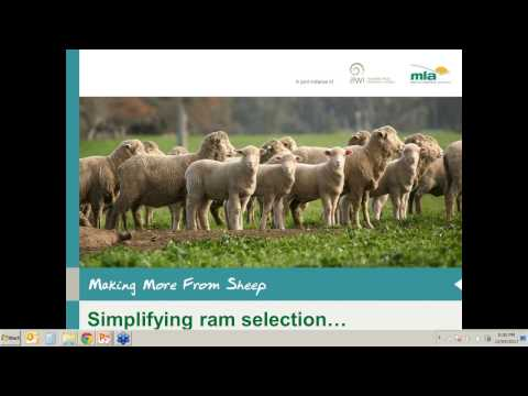Making More from Sheep | Simplifying Ram selection through genetics technologies