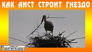 Как Аист строит гнездо