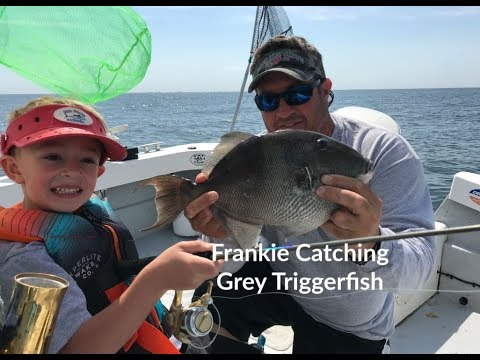 Frankie James Catching Grey Triggerfish And Snappers