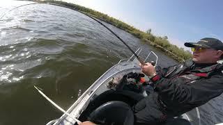 Рыбалка в Астрахани троллинг на сома