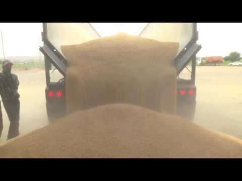 Trinity Trailer - Transporting Feed