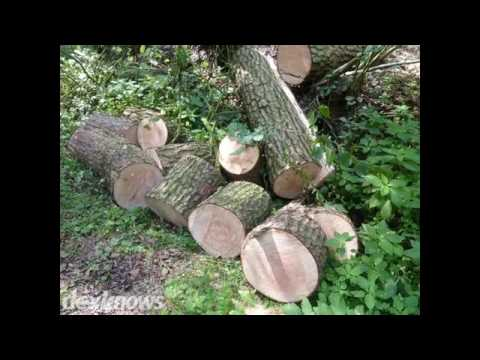 Albert Lea Tree Service Hollandale Mn 56045 6094