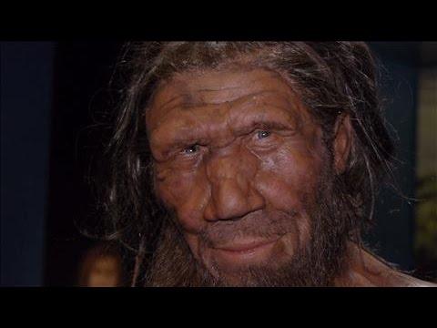 Neanderthals, Humans H...