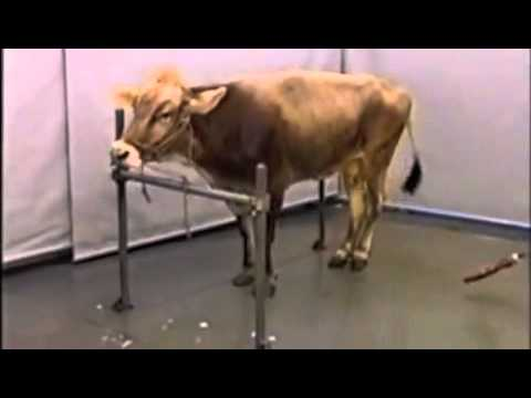 BSE symptom video