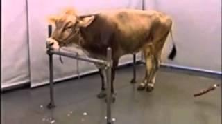 Скачать BSE Symptom Video