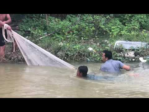 The Fishing Man Catches Pangasius Fish Around 2kg By The Net!