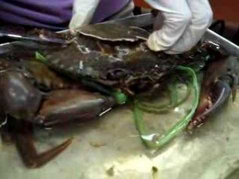 how to kill mud crab humanely