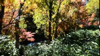 【紅葉 大雪山 北海道】小川の音と赤と黄色の木々の葉の色が本当に綺麗 2015 september 22