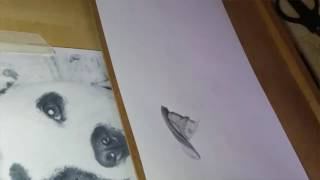 How to draw a staffy timelapse