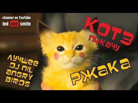 Приколы с котами смотреть онлайн бесплатно — хорошее