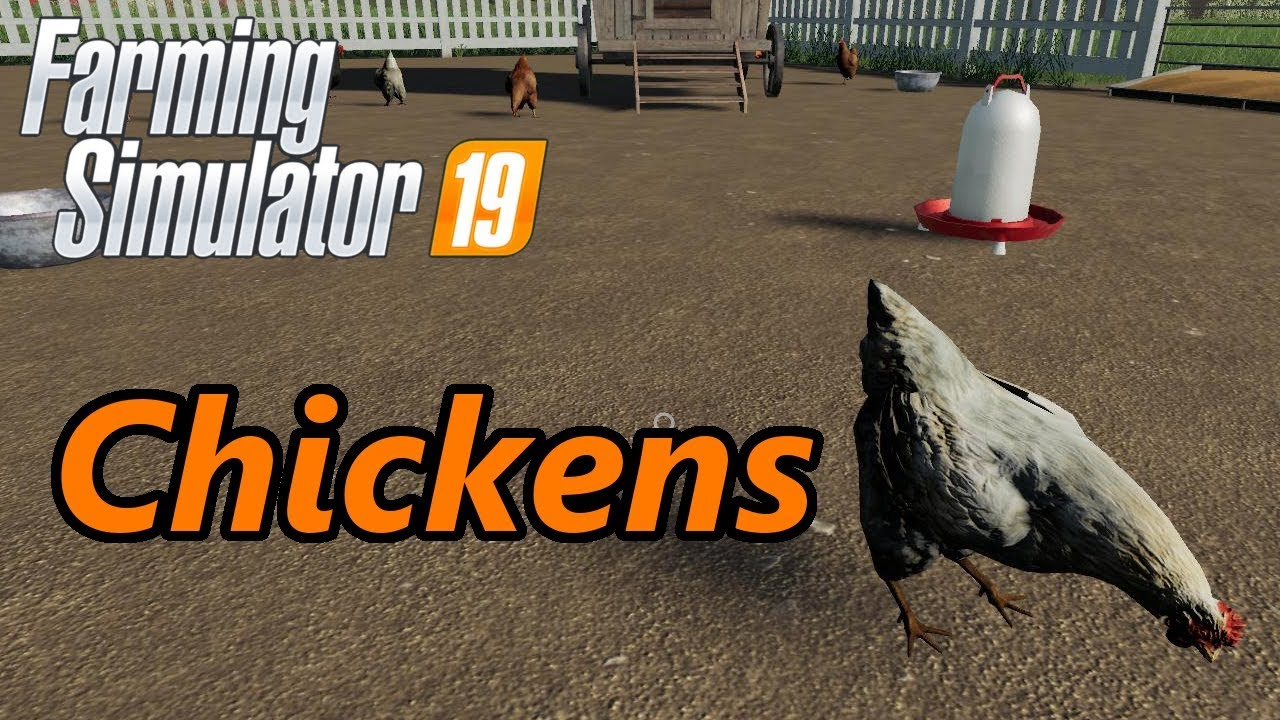 Farming Simulator 19 Tutorial Chickens Youtube